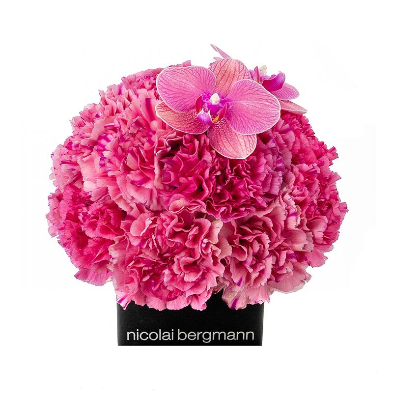 Carnation Blush
